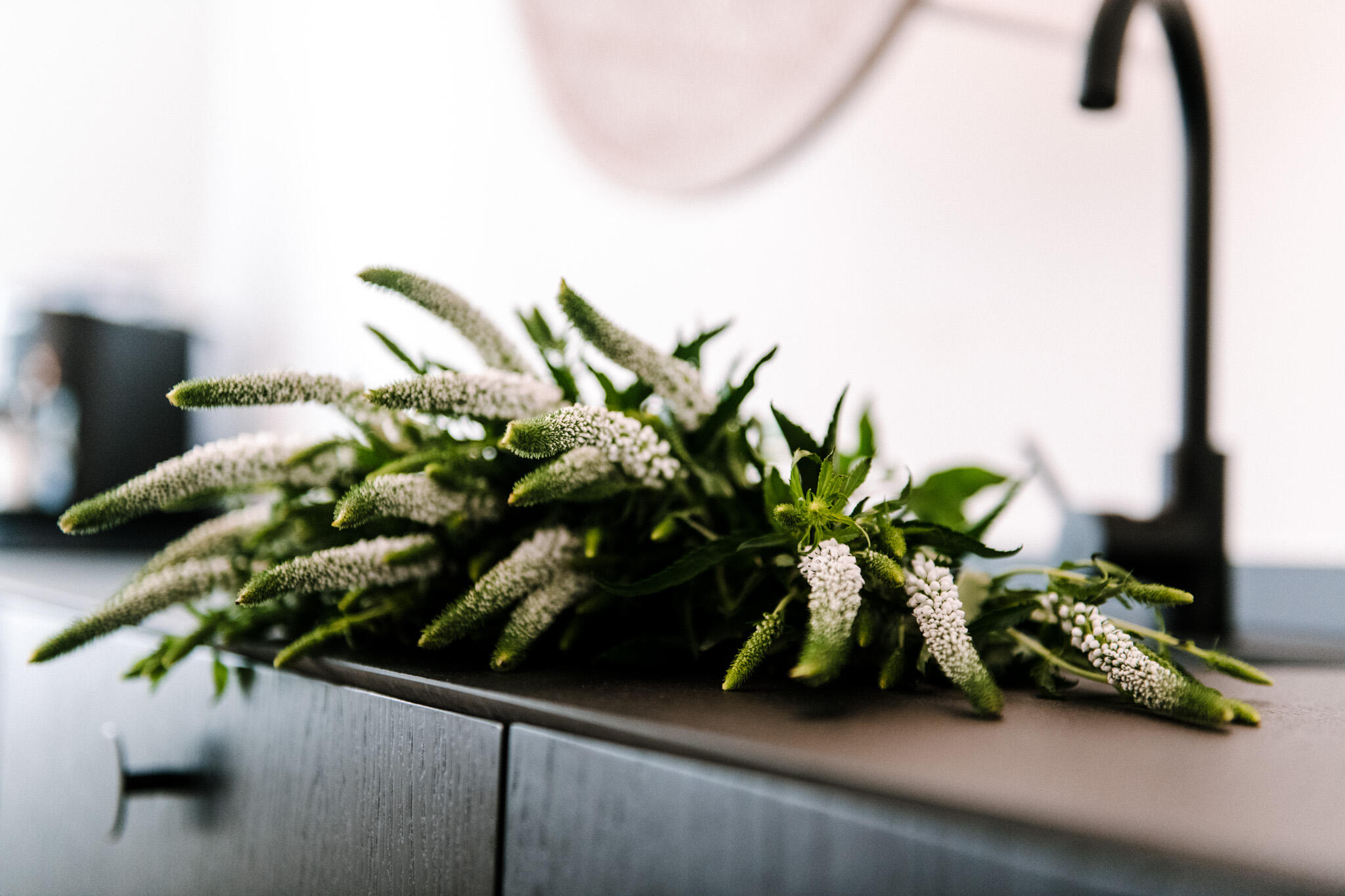 Pastel Blue roślina w kuchni